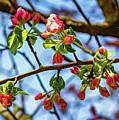 Spring Awakening 3 - Paint by Steve Harrington