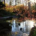 Spring Awakening In Japanese Garden by Carol Groenen