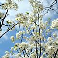 Spring Awakening by Kathy Bucari