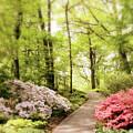 Spring Azaleas  by Jessica Jenney