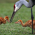 Spring Babies  by Davids Digits