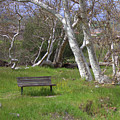 Spring Bench In Sycamore Grove Park by Carol Groenen