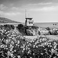 Spring Bloom At Leo Carrillo State Beach - Bw by Lynn Bauer
