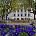 Spring Bloom by Rockland Filmworks