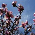 Spring Blooms 2010 by Anna Villarreal Garbis