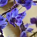 Spring Blooms by Lauren Radke