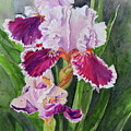 Spring Blooms by Patty Strubinger