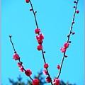 Spring Blooms by Sonali Gangane