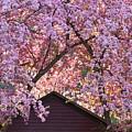 Spring Blossom Canopy by Alan L Graham
