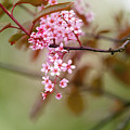 Spring Blossom by LHJB Photography