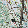 Spring Blossom by Mary Tuomi