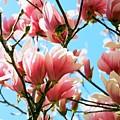 Spring Blossoms by Caroline Clark