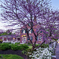 Spring Blossoms On Main Street In Freeport, Maine #50609 by John Bald