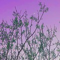 Spring Branches Lavender by Marisela Mungia