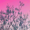 Spring Branches Rose by Marisela Mungia