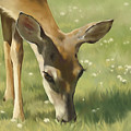Spring Buck by Laurie Musser