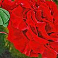 Spring Bud's 4 by Herschel Fall