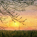 Spring Buds Sunset by Lynn ACourt