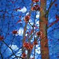 Spring Buds by Tom Reynen