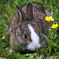 Spring Bunny by Deb Henman