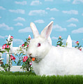 Spring Bunny Loves His Carrots by Sheila Fitzgerald
