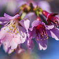 Spring Burst by Korrine Holt