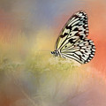 Spring Butterfly by Cindy Archbell