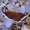 Spring Butterfly  by Jeff Swan