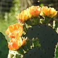 Spring Cactus 14 by Karen Mangold
