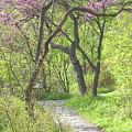 Spring Canopy by Ann Horn