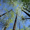 Spring Canopy Skylight by Joshua Bales