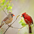 Spring Cardinals by Bonnie Barry