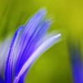 Spring by Casper Cammeraat