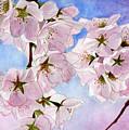 Spring- Cherry Blossom by Swati Singh