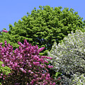 Spring Color 2 051818 by Mary Bedy