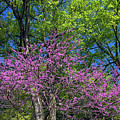 Spring Colors by Sally Weigand