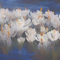 Spring Crocuses by Helen White