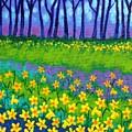 Spring Daffodils by John  Nolan