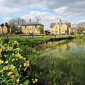 Spring Daffodils, Ramsey Village Pond, Cambridgeshire, England by Dave Porter
