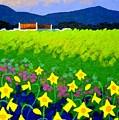 Spring Daffs Ireland by John  Nolan