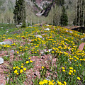 Spring Dandelion And Mountain Landscape by Cascade Colors