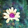 Spring Daydreams by Tara Turner