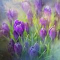 Spring Delight by Eva Lechner