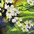 Spring Dogwoods by Spencer Meagher