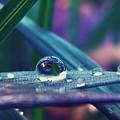 Spring Droplet by Devin Dixon