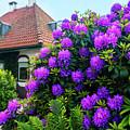 Spring  Dutch Garden  by Ariadna De Raadt
