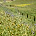 Spring Fenceline Fantasy by Lynn Bauer