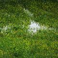 Spring Field Memphis by Lizi Beard-Ward