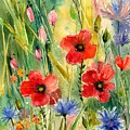 Spring Field by Suzann Sines