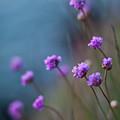 Spring Fields by Mike Reid